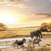 Africa Mercer BenefitsMonitor® image